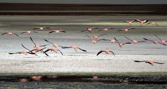FlamingosWegvliegen_bevrijding